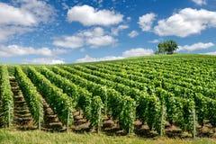 Ландшафт виноградника, Франция Стоковое Изображение RF