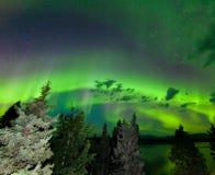 Интенсивное зеленое северное сияние над бореальным лесом Стоковое Фото