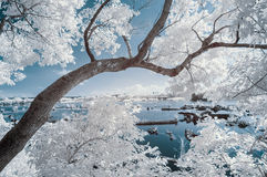 Ландшафт инфракрасн Стоковые Фотографии RF