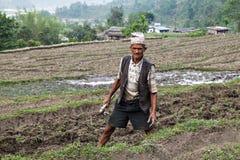 尼泊尔农夫 库存照片