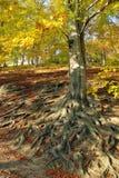 осенний ландшафт падения Стоковые Фотографии RF