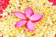兰花桃红色花温泉 库存照片