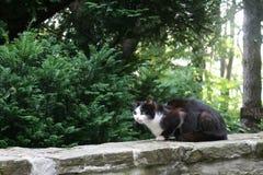Кот на каменной загородке Стоковое Изображение