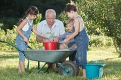 Τα παιδιά βοηθούν τον παππού της στον κήπο Στοκ φωτογραφία με δικαίωμα ελεύθερης χρήσης