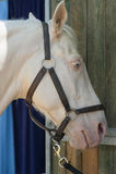 Αραβικό και αιγυπτιακό άλογο Στοκ φωτογραφία με δικαίωμα ελεύθερης χρήσης