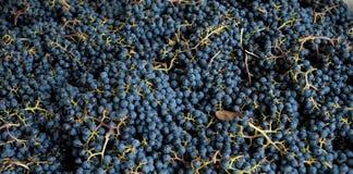 葡萄墨尔乐红葡萄酒 库存图片