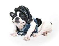 滑稽的骑自行车的人小狗 库存图片