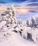 用树冰和雪盖的树在山 免版税库存照片