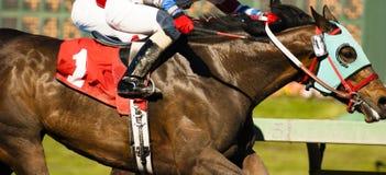 Один жокей всадника лошади приходит через линию отделку гонки фото Стоковые Изображения