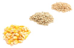 在白色背景的玉米、黑麦和麦子五谷 免版税库存照片