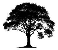 一棵孤立树的剪影 免版税库存照片