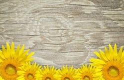 Παλαιά ξύλινα πλαίσιο και υπόβαθρο με τα λουλούδια ήλιων Στοκ Φωτογραφίες