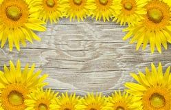 Παλαιά ξύλινα πλαίσιο και υπόβαθρο με τα λουλούδια ήλιων Στοκ φωτογραφία με δικαίωμα ελεύθερης χρήσης