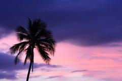 与棕榈树的热带日落背景 库存照片