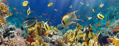 Коралл и рыбы Стоковые Фотографии RF