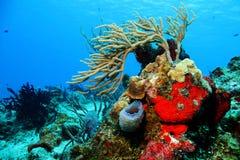 Κοράλλια ενάντια στο μπλε νερό Στοκ εικόνες με δικαίωμα ελεύθερης χρήσης