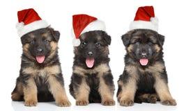 在红色圣诞老人帽子的德国牧羊犬小狗 免版税库存照片