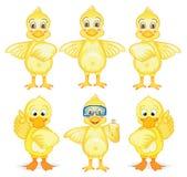 六只鸭子 免版税库存图片