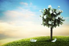 概念,在草的金钱树 免版税库存图片