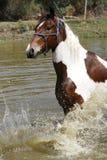 飞溅在水坝的马 免版税库存照片