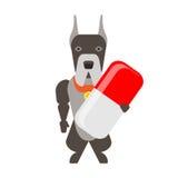 Собака с лекарством Стоковое Фото