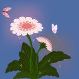 百日菊属花 库存图片