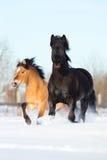 两马奔跑在冬天 库存照片