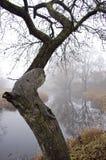 在河和秋天薄雾附近的老苹果树 免版税库存图片
