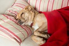 病的狗 免版税库存图片