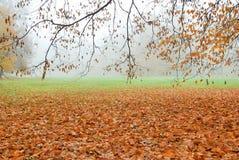 在地面上下落的秋叶在有薄雾的森林公园 库存照片