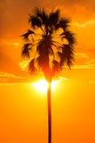 与棕榈树剪影的黄光日落 免版税库存照片