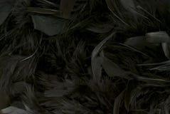 Μαύρα φτερά Στοκ φωτογραφία με δικαίωμα ελεύθερης χρήσης