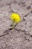 新芽通过沙子做方式 库存照片