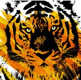 艺术性的老虎面孔 免版税库存照片