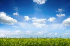 绿色新鲜的草的领域在蓝天下 免版税库存图片