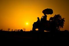 大象和日落与日落场面 免版税库存照片