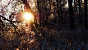 发光通过森林的太阳 免版税库存照片