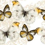 Безшовная картина обоев вектора с бабочками Стоковые Фото