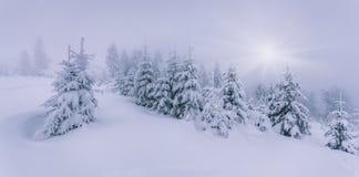 有雾的冬天风景在森林里。 库存图片