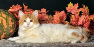 美丽的猫和秋天叶子 库存照片
