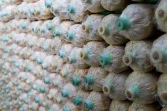 蘑菇在塑料瓶长大 免版税库存图片