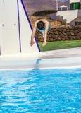 Мальчик скача в голубой бассейн Стоковое Изображение