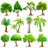 树汇集 免版税库存图片