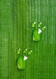 Следы ноги углерода на лист Стоковое Фото