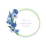 开花框架 花卉边界 被隔绝的花束矢车菊 库存图片
