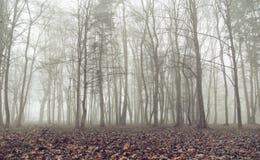 在秋天天期间,老森林 免版税库存图片