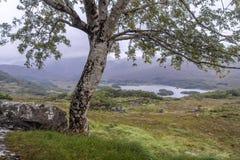 树和风景在夫人景色 库存图片