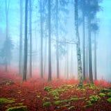有雾的秋天森林 免版税库存照片