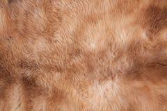 Текстура меха Стоковая Фотография