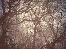 силуэт ветвей Стоковая Фотография